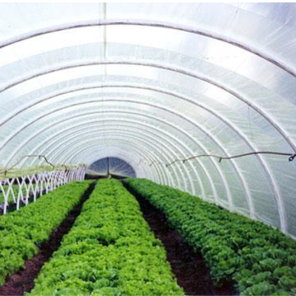 Film per agricoltura